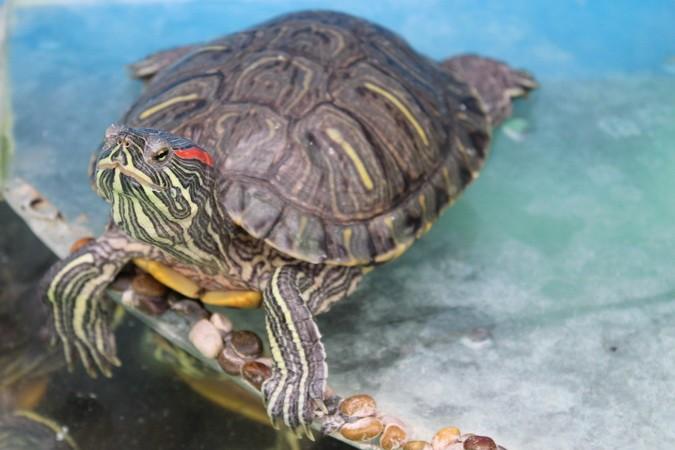 Чрерпаха1