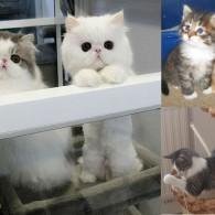 Какие бывают породы кошек