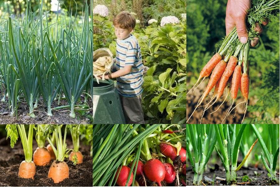 Когда сажать овощи в открытый грунт