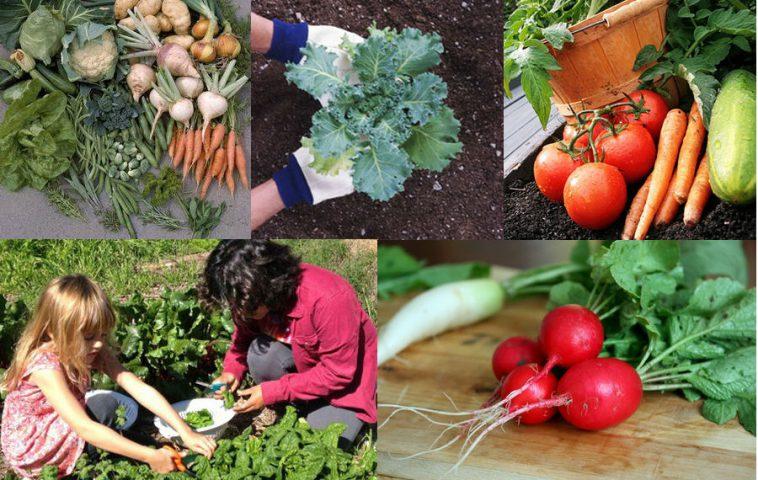 Овощи в открытом грунте
