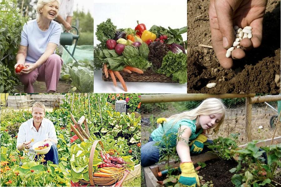 Что можно сажать осенью на огороде 250
