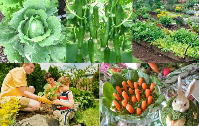 Размещение овощей на грядках