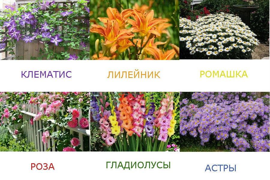 Растения, цветущие в июле - августе