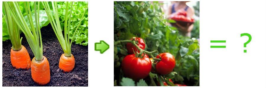 Хорошие и плохие овощи-предшественники