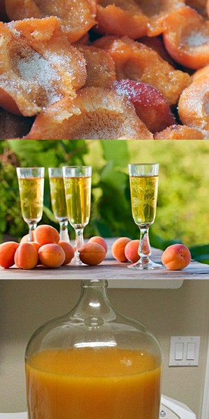 Вино из абрикосов, домашнее