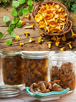 лисички грибы рецепты приготовления соленые