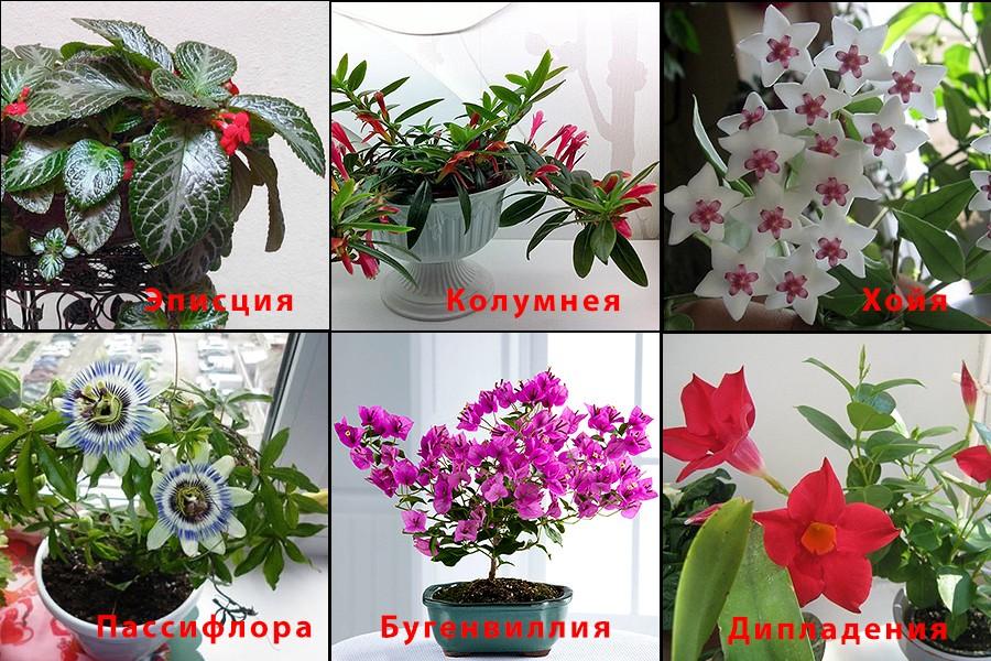 Домашние цветы и каталог