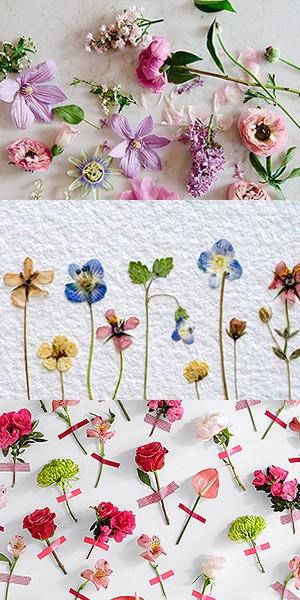 Красивый гербарий из цветов фото