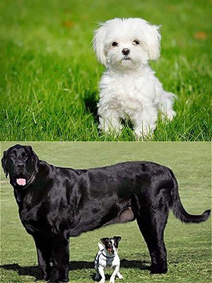 Каждой собаке - уникальное имя