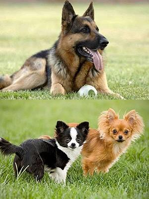 Клички для собак разных пород
