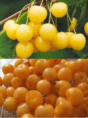 из желтой ягоды