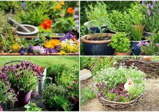 травы для\ чая на своем участке - ароматный цветник