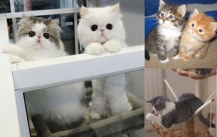 Какие бывают породы котов с фото