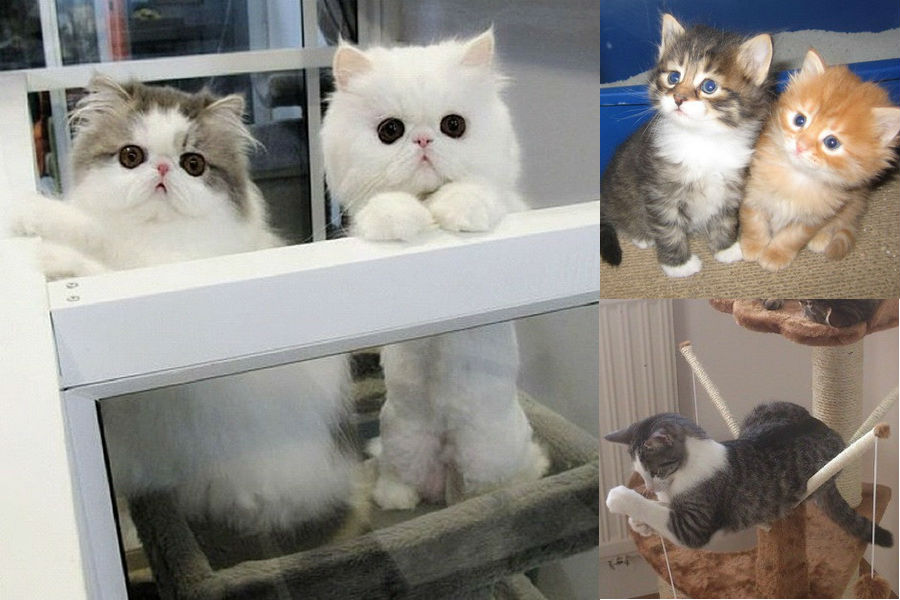 Какие бывают породы кошек: фото с названиями