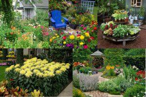Read more about the article Какие цветы можно посадить на даче, чтобы цвели все лето
