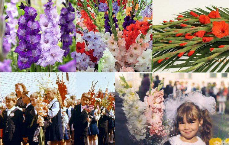 Цветы к 1 сентября какие посадить