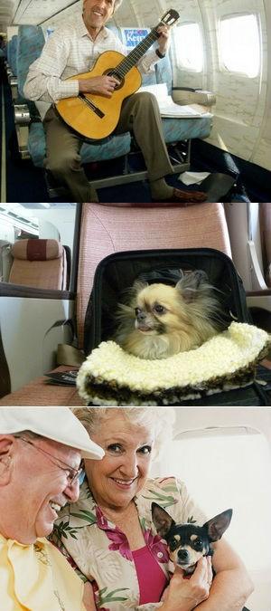 Перевозка в самолете музыкальных инструментов, животных