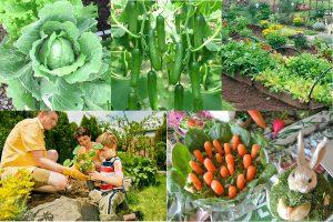 Read more about the article Соседи по грядке: какие овощи можно сажать рядом друг с другом и после каких