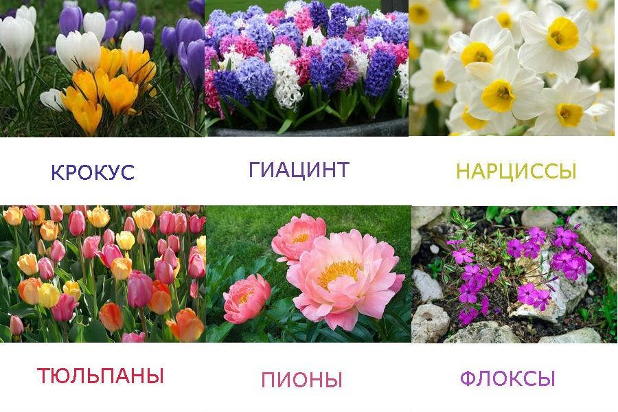 Растения, которые цветут весной - в начале лета