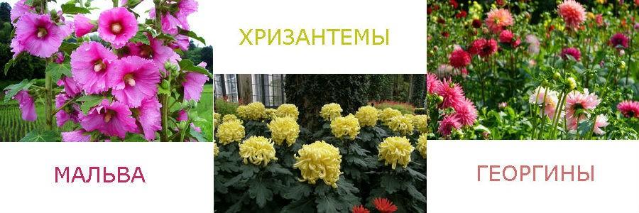 Растения, цветущие до поздней осени