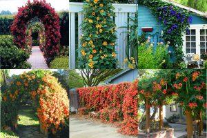 Read more about the article Вьющиеся растения для сада: фото и названия