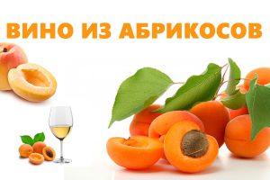 Вино из абрикосов в домашних условиях: лучик солнца в вашем бокале
