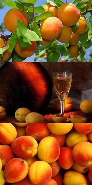 Абрикосовое вино, домашнее