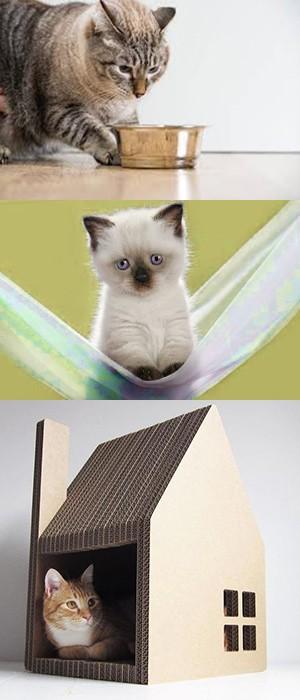 Удобства для котенка