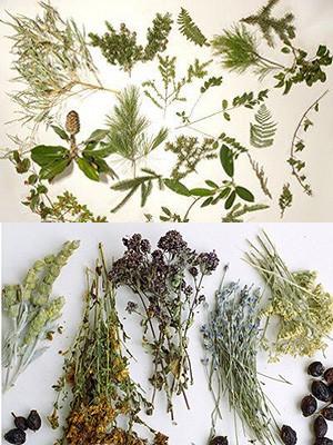 Гербарий из растений