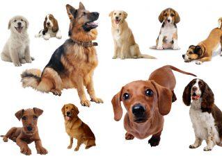 Как можно назвать собаку