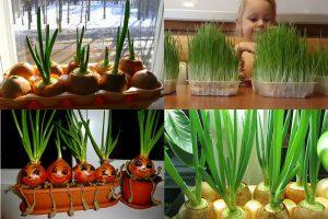 Read more about the article Как вырастить зеленый лук на подоконнике зимой