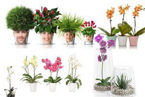 Read more about the article Неприхотливые комнатные цветы, цветущие круглый год