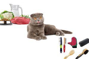 Шотландская вислоухая кошка: уход и кормление