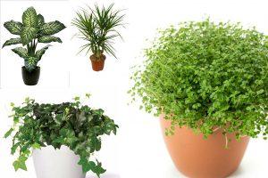 Лиственные комнатные растения: проблемы и их устранение