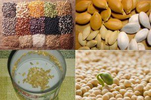 Весенняя битва за урожай: комплексная подготовка семян к посеву