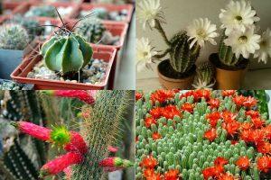 Популярные виды домашних кактусов: фото и названия на русском языке