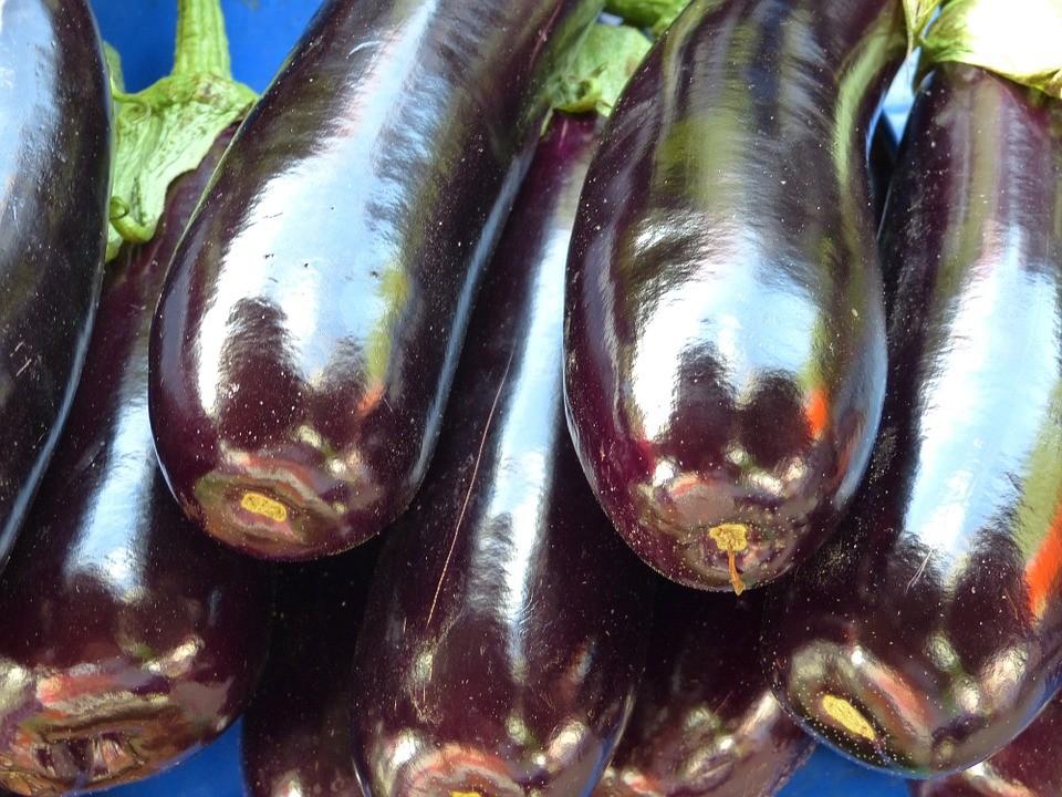 Выращивание баклажанов в открытом грунте: посадка и уход