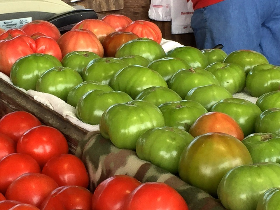 Дозаривание помидоров в домашних условиях: правила, как ускорить