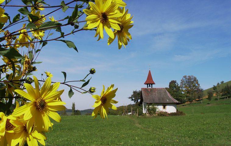 Топинамбур: выращивание, уборка, хранение