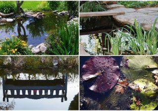 как ухаживать за искусственным водоемом на даче