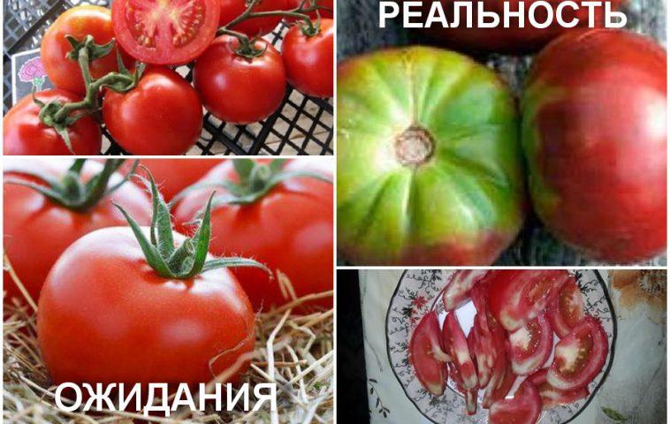 Почему помидоры внутри белые и жесткие, и созревают наполовину