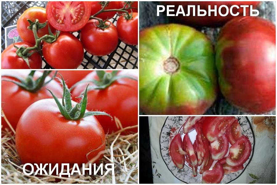 Почему помидор внутри белый и с жесткими прожилками?