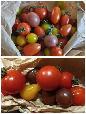 сорта помидоров черри