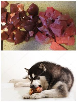 индюшачья печень для собаки