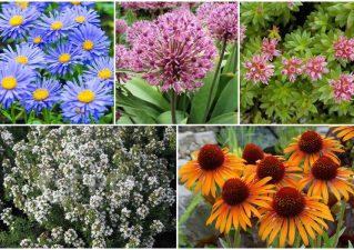 засухоустойчивые цветы для клумбы на солнечном участке