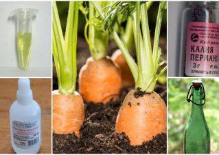 Как и чем обрабатывать семена моркови перед посадкой в открытый грунт