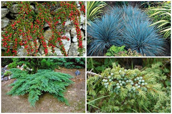 засухоустойчивые травы и кустарники