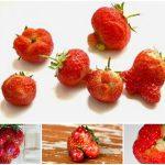почему плоды клубники мелкие и уродливые