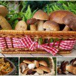 где и когда собирать грибы