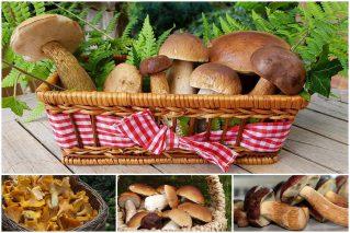 Read more about the article Секреты тихой охоты: где и когда собирать различные виды грибов